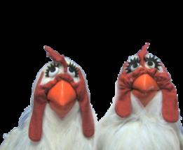 3c4e4-chickens