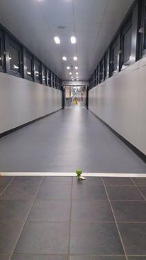 4 Kermit Goes Down the Corridor