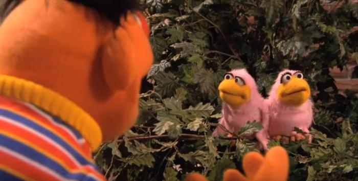 Ernie I wonder birds